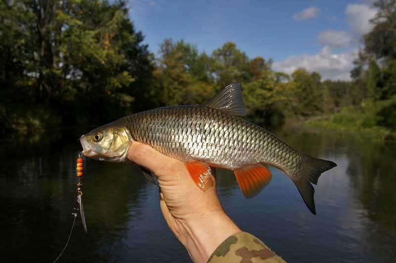 Река постная ярославской области фото рыбалка